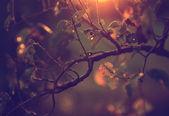 Vintage photo of cherry tree leaves — Stock Photo