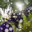 White butterfly on purple wild flower in summer - Stock Photo