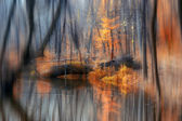 Autumn forest and lake — Stock Photo