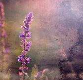 Vintage flower. Foto av vackra vilda blomma med mörk grunge gamla papper mönster. — Stockfoto
