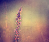 Vintage flower. Photo of beautiful wild flower with dark grunge old paper pattern. — Stock Photo