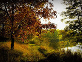 Landscape with autumn forest and lake — Stock Photo