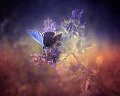 Vintage papillon. — Photo