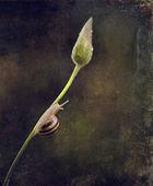 Sztuka ślimak — Zdjęcie stockowe