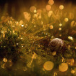 Macro view of a snail shell and dew covered grass — Stock Photo