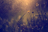Beautiful camomile wildflower in the setting sun lights — Stock Photo