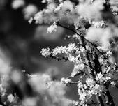 Vintage cherry blossom. Antique style photo of tree flowers with grunge old paper pattern. — Stock Photo