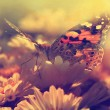 Butterfly in sunset — Stock Photo #24893693