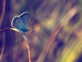 Butterfly macro photo — Stock Photo