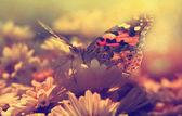 Günbatımında kelebek — Stok fotoğraf