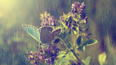 Blue butterfly and purple wild flowers in heavy rain. — Stock Photo