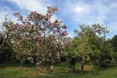 Drzewa świętojańskiego i słońca — Zdjęcie stockowe