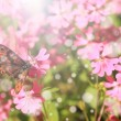 Vintage photo of butterfly — Stock Photo