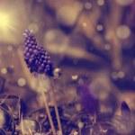 Vintage flower — Stock Photo #25451221