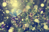 Beautiful blue butterfly relax on purple flower in the forest. — Stock Photo