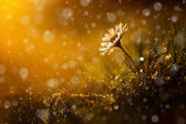 Beautiful wild flower in the forest after rain and sunset — Stock Photo
