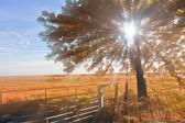 Farm fence and tree — Stock Photo