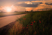 Rural landscape in sunset with poppies — Stock Photo