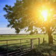 Farm fence and tree — Stock Photo