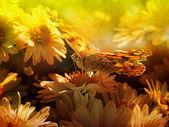 Fjäril i solnedgången — Stockfoto