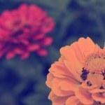 Vintage flower — Stock Photo #30110247