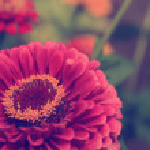 Vintage flower — Stock Photo #30110731
