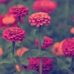Vintage flower — Stock Photo #30110849