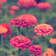 Vintage flower — Stock Photo