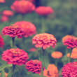 Stock Photo: Vintage flower