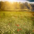 Meadow with mountain background — Stock Photo #30113293