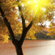 Autumn scene with ray of light — Stock Photo