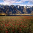 Beautiful flower field with background mountains — Stock Photo #30115065