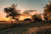 Summer sunset scene — Stock Photo