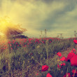 Vintage photo of poppies in sunset — Stock Photo