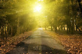 Autumn scene with forest road — Stock Photo