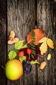 Meyve ile sonbahar arka plan — Stok fotoğraf