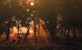Deer in autumn forest at sunrise — Stock Photo