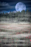 Moonrise over wild flower field — Foto de Stock