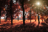 Autumn forest in sunrise — Stock Photo