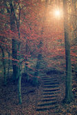 Vintage photo of stone stairs in autumn forest — Stock Photo