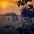 Stock Photo: Abandoned cemetery