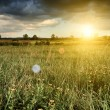Sunny meadow — Stock Photo #34558729