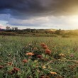 Stock Photo: Sunny meadow