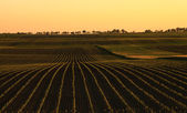Agricultural landscape in sunset — Stock Photo