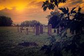 Abandoned cemetery — Stock Photo