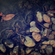 Vintage photo of autumn leaves and rocks in water — Stock Photo