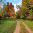 Autumn forest road — Stock Photo