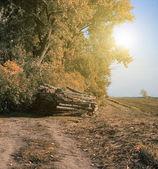 Pile de bois — Photo