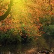 River in autumn forest — Foto Stock