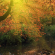 River in autumn forest — Stockfoto